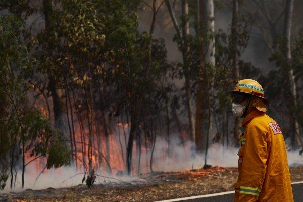[新聞] 說出來你可能不信:澳洲森林大火很多是鳥放的……